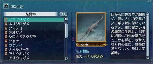 ノコギリザメ.jpg